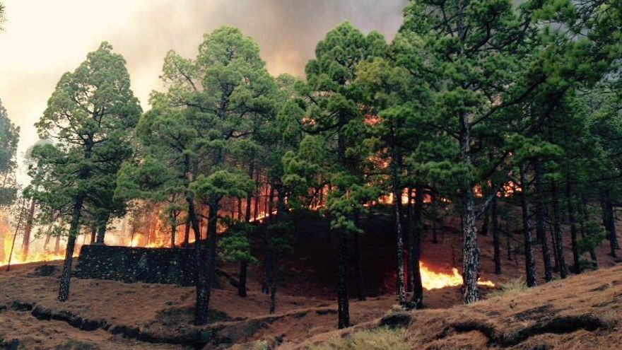 En la imagen, el incendio registrado en La Palma el pasado mes de agosto. Foto: RAMÓN P. YELO/ ÁNGEL PALOMARES