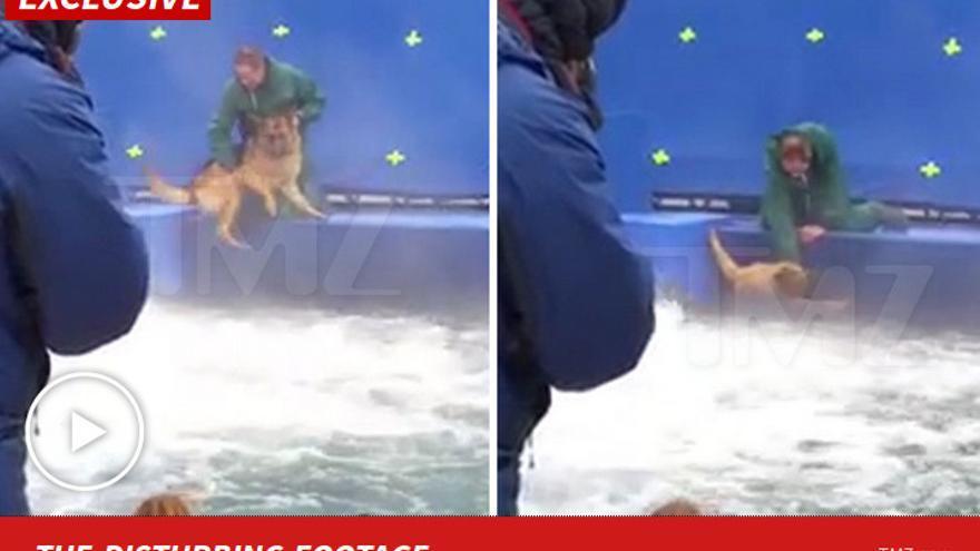 El vídeo del pastor alemán que ha sentenciado 'A dog's purpose'