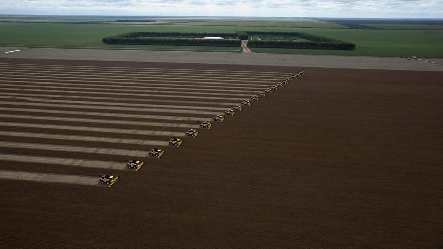 Un quinto de soja y carne de Brasil vendida a la UE procede de la deforestación