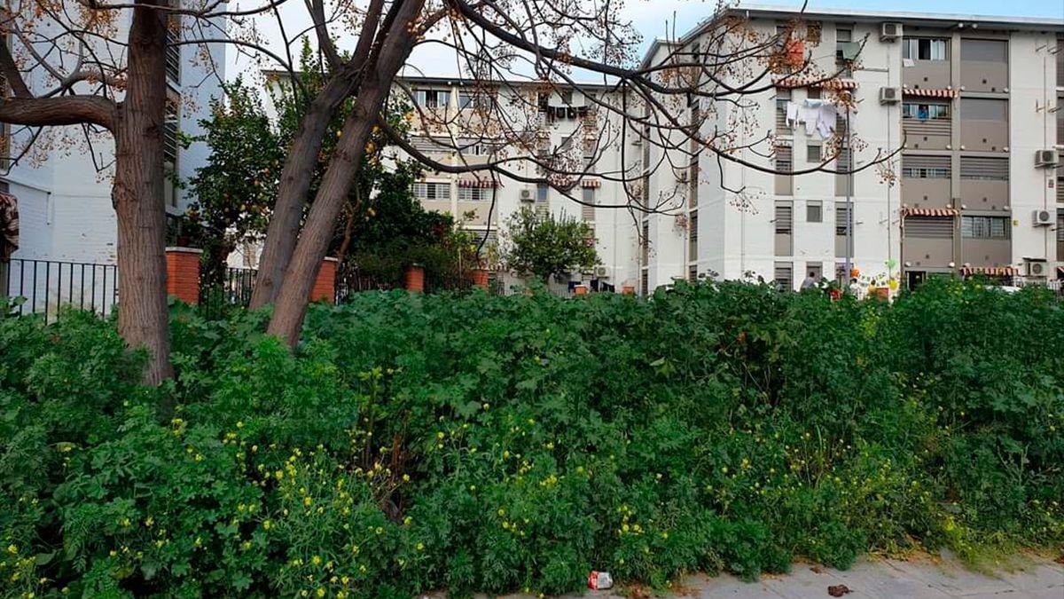 Crecimiento de hierba y plantas en un solar urbano.