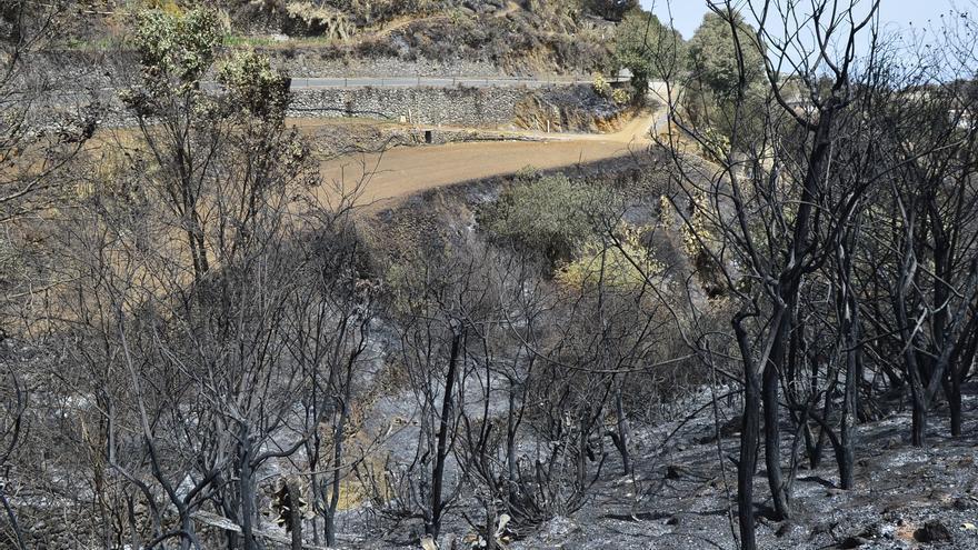 Efectos del incendio en la cumbre de Gran Canaria. (ÁNGEL SARMIENTO)