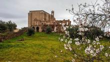 Almendros floridos ante las ruinas del convento de San Antonio de Padua
