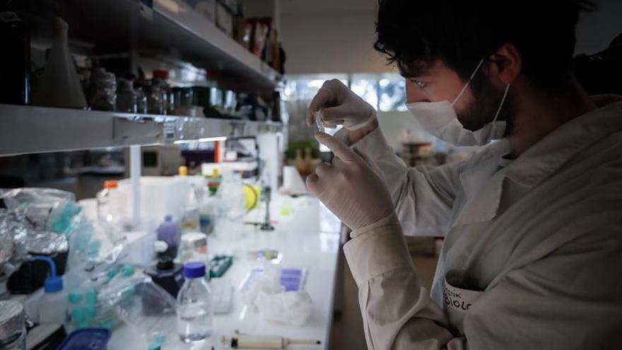 La OMS está alerta por las persistentes curvas al alza de la pandemia en América