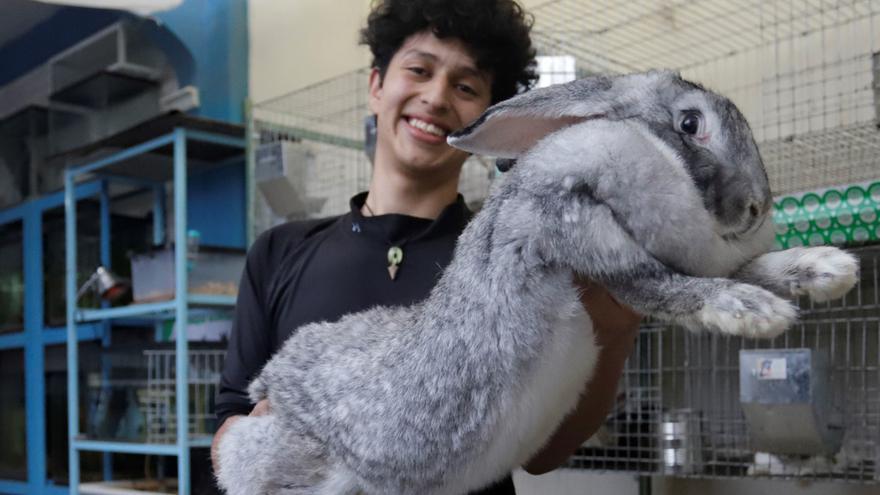 Un estudiante mexicano cría en Puebla los conejos más grandes del mundo