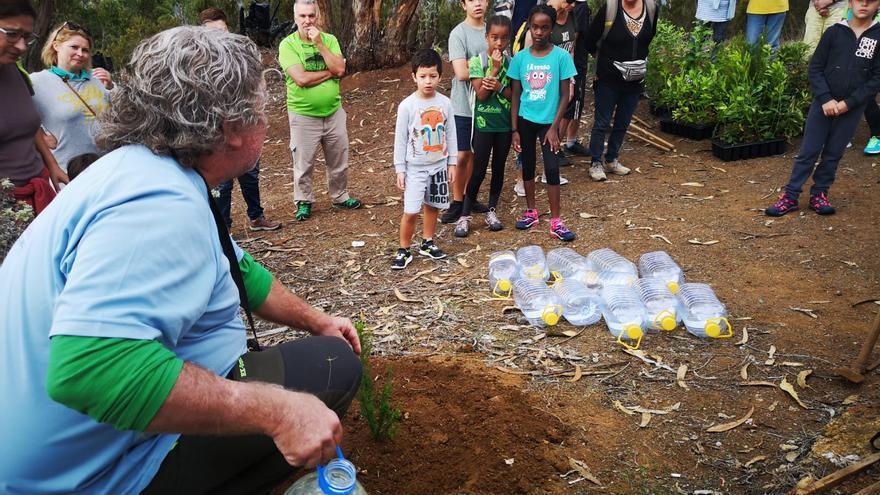 Plantación de árboles de laurisilva en Firgas