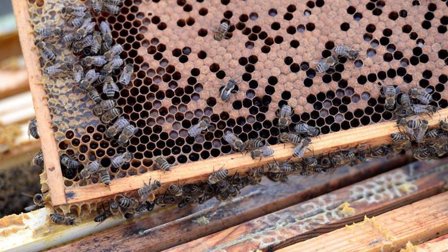 Greenpeace pide a Bruselas que prohíba más pesticidas dañinos para las abejas