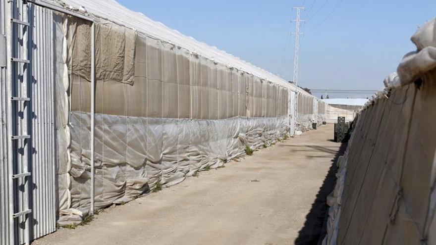 Mata a su expareja y se suicida en un invernadero en Almería