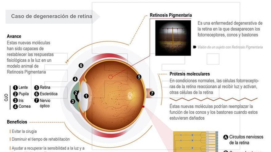 Desarrollan unas moléculas que ayudan a restaurar la degeneración de retina