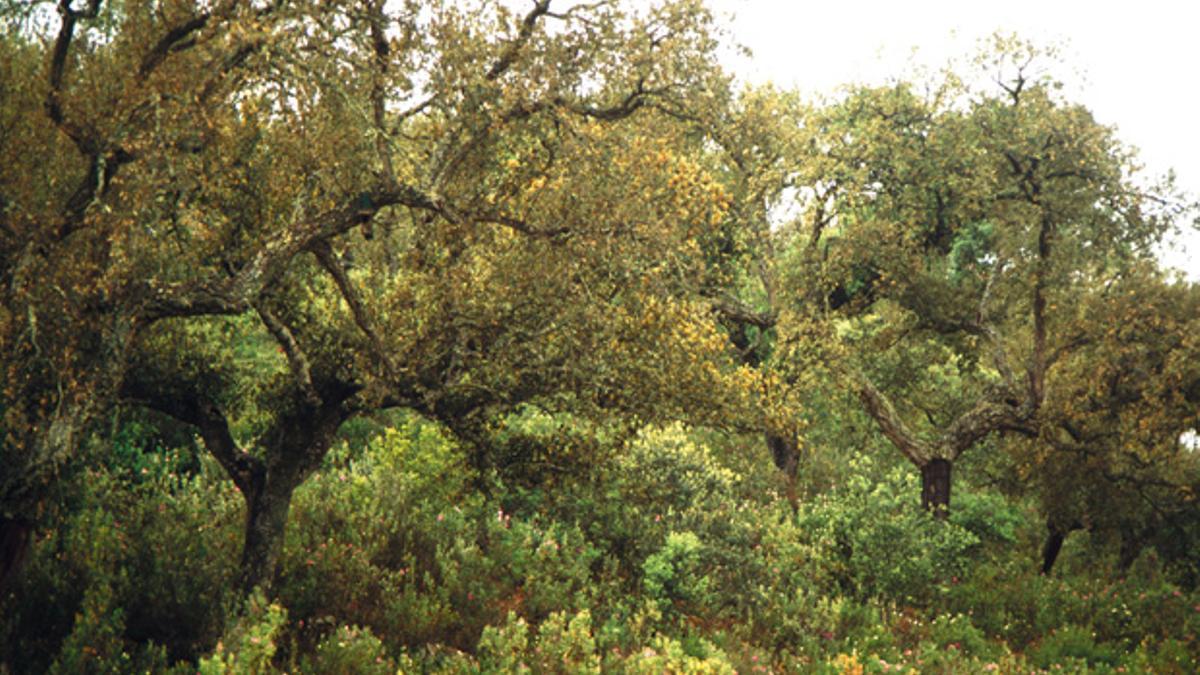 Detalle del parque natural de la Sierra de Hornachuelos.