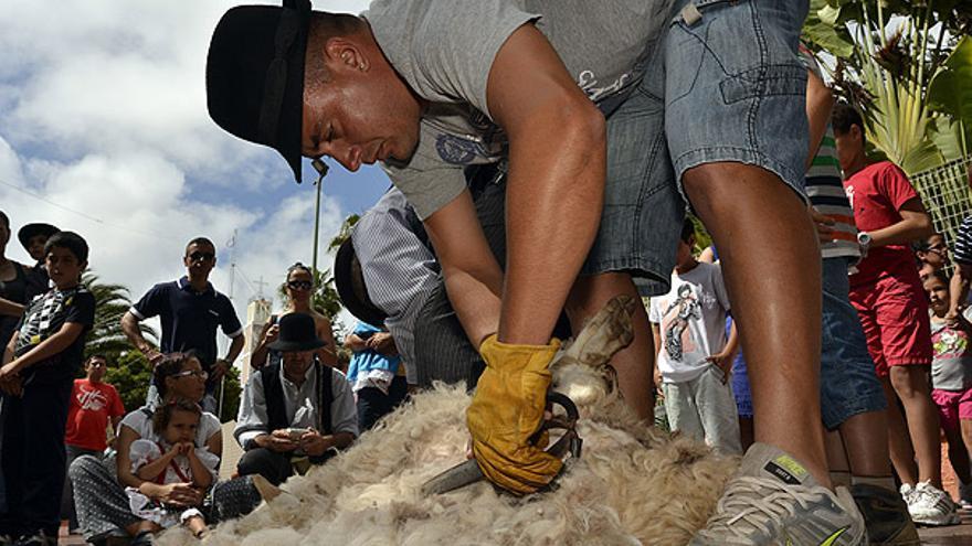 Del trasquilado de ovejas #1