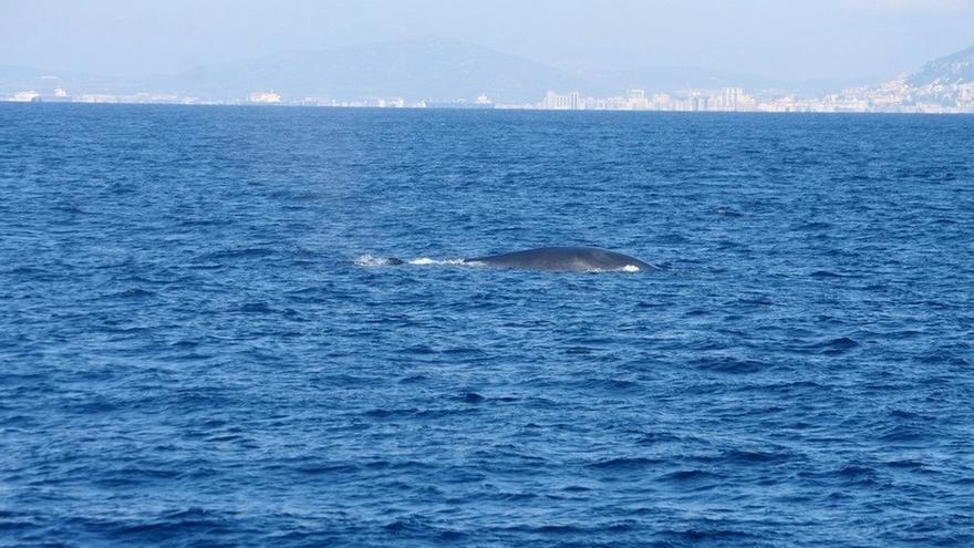 La nueva temporada para avistar cetáceos en las costas vascas se iniciará en abril y concluirá en octubre