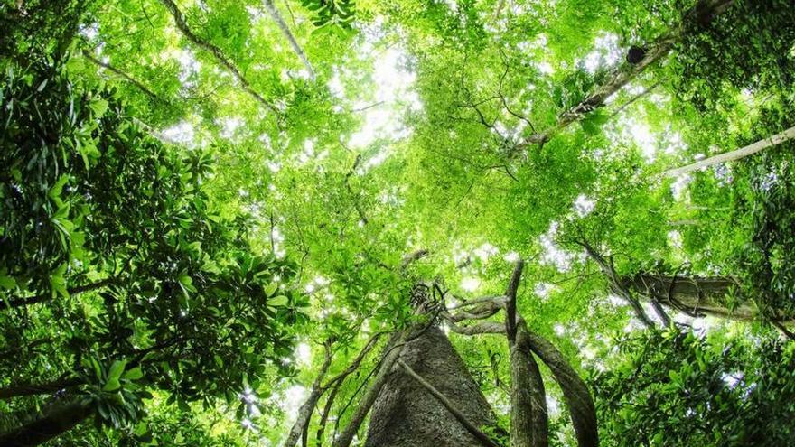 De la ciudad al desierto: lugares donde pueden aflorar nuevos bosques
