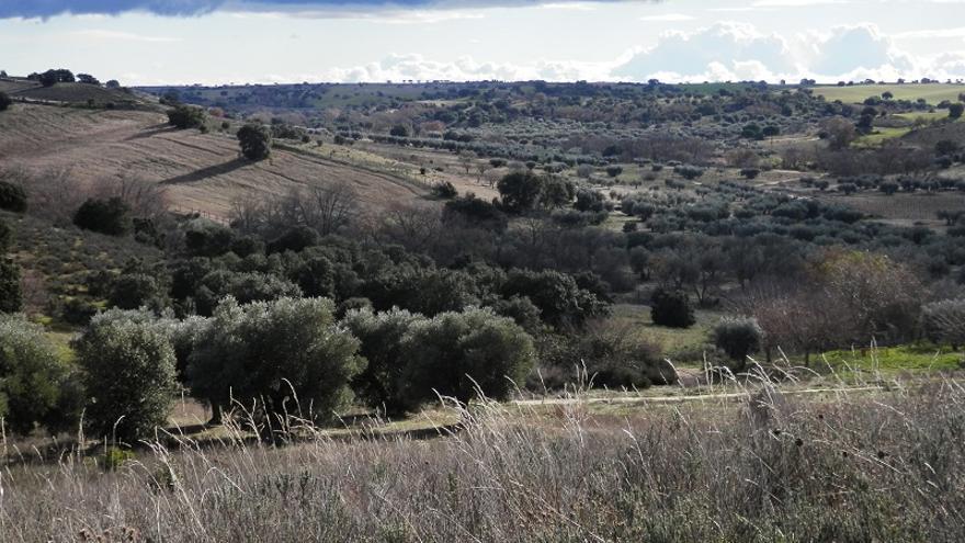"""""""Progreso"""" pero sin quitar """"encinas u olivares"""": reacción del alcalde de Méntrida a las críticas vecinales a dos proyectos fotovoltaicos"""