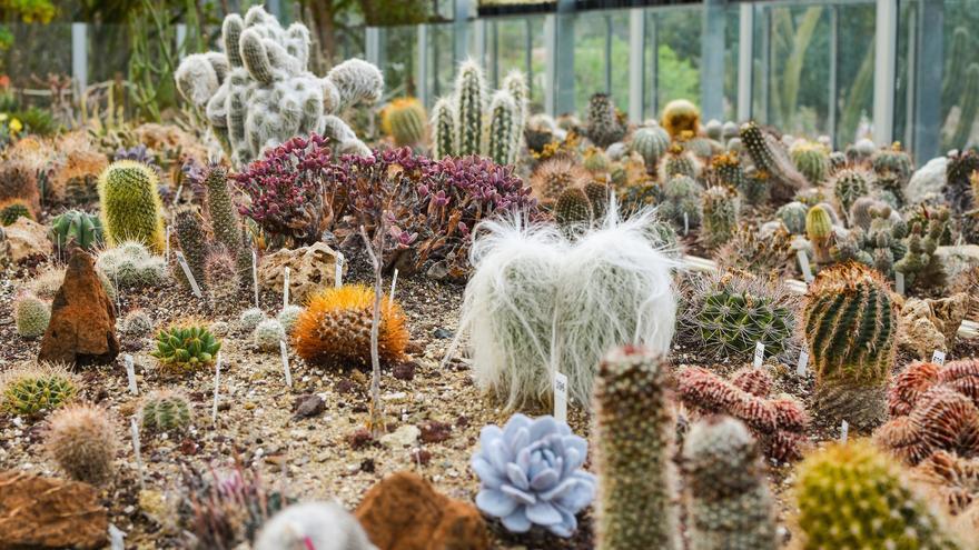 el bancal de del jardn botnico de cactus de foto miguel heredia