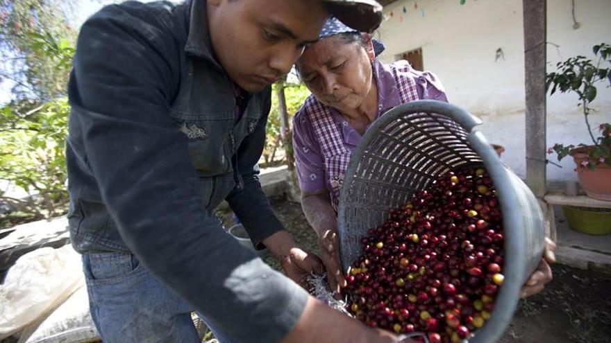 El reto del café: una sostenibilidad enfocada en lo social y económico