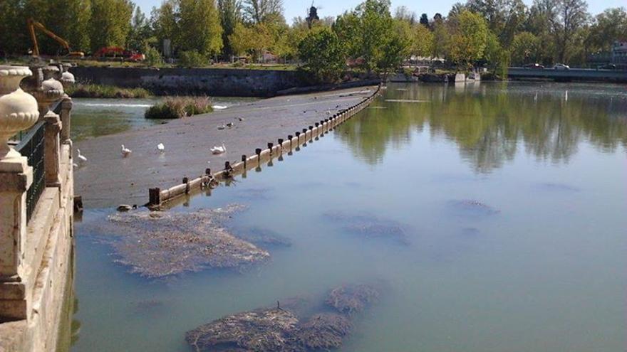 Situación Río Tajo, foto por la Plataforma en Defensa del Tajo de Aranjuez