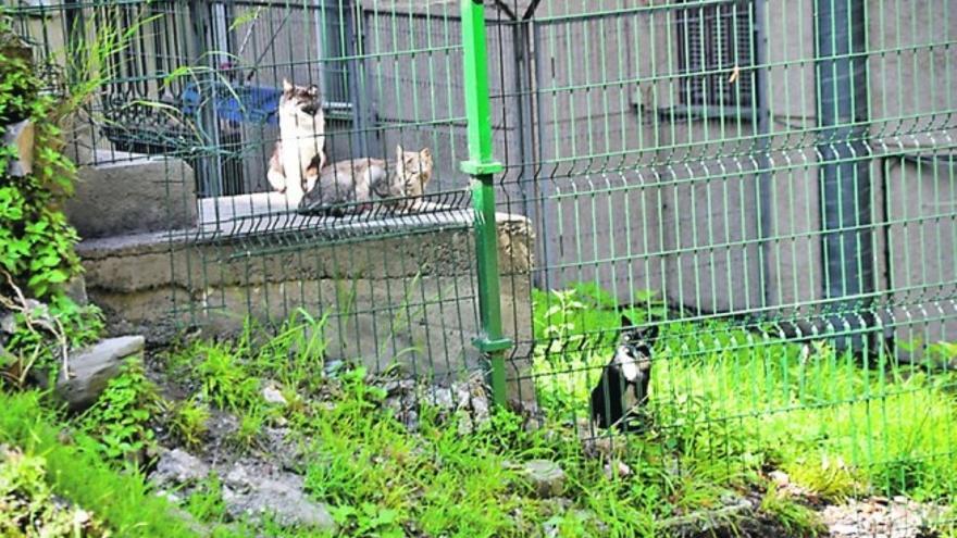 Una colonia de gatos, en Barakaldo