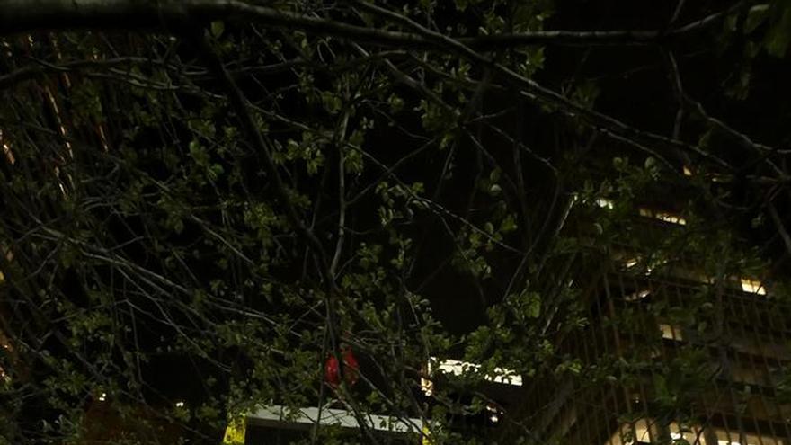 Llegan ecos románicos al corazón de Nueva York de la mano de Lluís Lleó