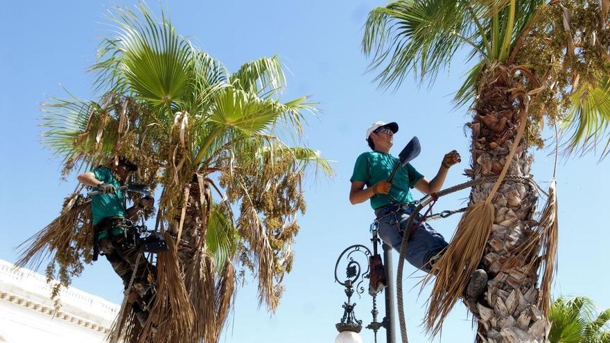 La estación de fruticultura de Zalla celebrará el 25 de enero y 1 de febrero sendas jornadas en torno a la poda