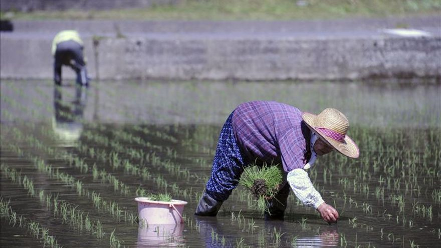 Una granja en la antigua zona restringida de Fukushima comienza a plantar arroz