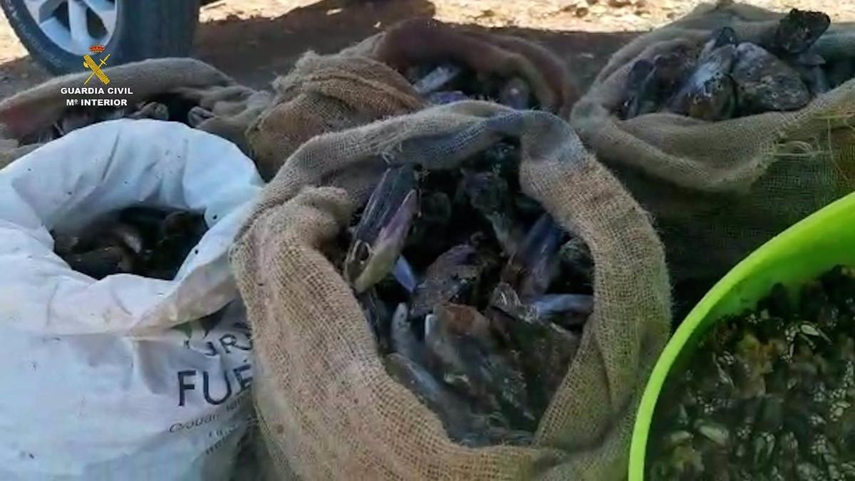 Mariscos incautados a estas personas en Fuerteventura