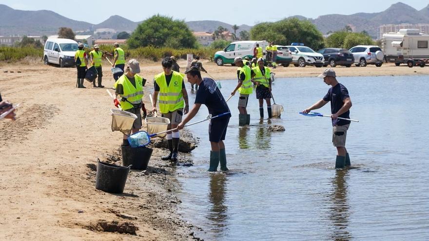 Archivo - Vuelven a abrir al baño tras su limpieza seis de las playas afectadas por la aparición de peces muertos en el Mar Menor