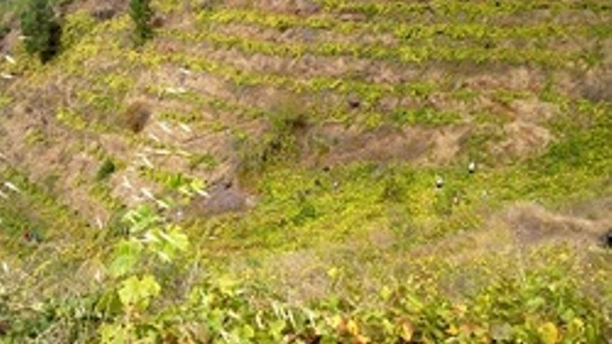Panorámica de parcelas agrarias que conforman el tradicional paisaje de viñedos en bancales.