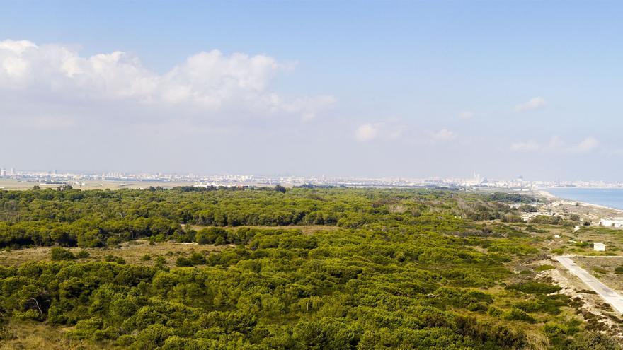 La Devesa es una de las zonas del Parque que mejor se ha recuperado de la degradación de los años 70. Autor: Jordi castro