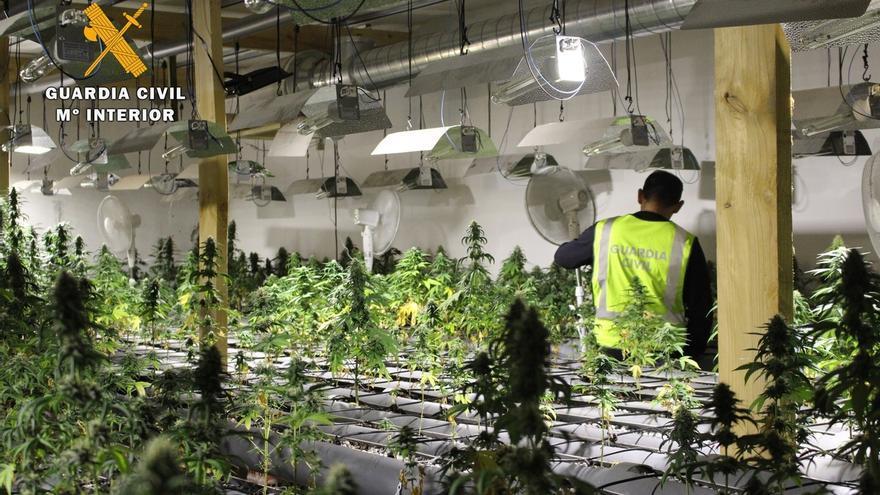Desmantelada en Camargo la mayor plantación de marihuana localizada en Cantabria, con más de mil plantas