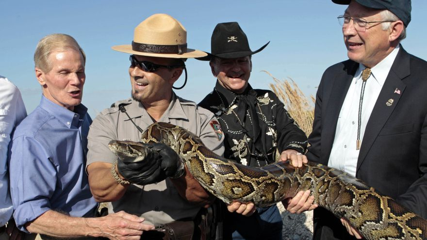 El secretario de Interior, un senador y dos agentes de los servicios de protección de la naturaleza sostienen una serpiente pitón en las Everglades de Florida en 2012.