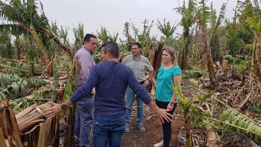 Visita a una finca de plátanos de la comarca oeste de La Palma afectada por el temporal de viento.