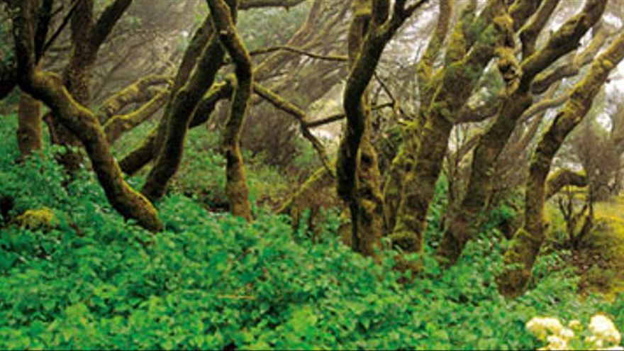 Dentro del Parque Natural de Doramas destaca Los Tilos de Moya. Es punto de visita obligada para los amantes de la botánica por la variedad de flora y fauna, y por la multitud de endemismos de alto interés científico.