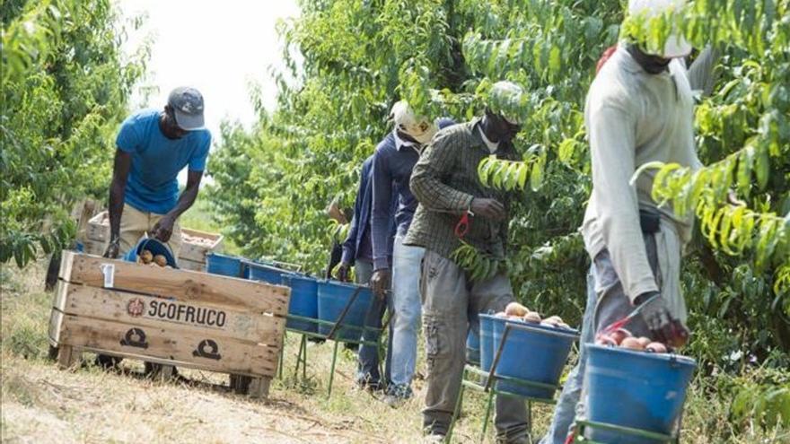 Temporeros trabajando en la recogida del melocotón