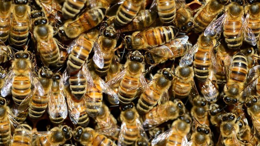 Las abejas se mueren y por fin conocemos al culpable