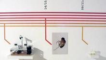 Drosophila Titanus, la mosca viajera de Andy Gracie