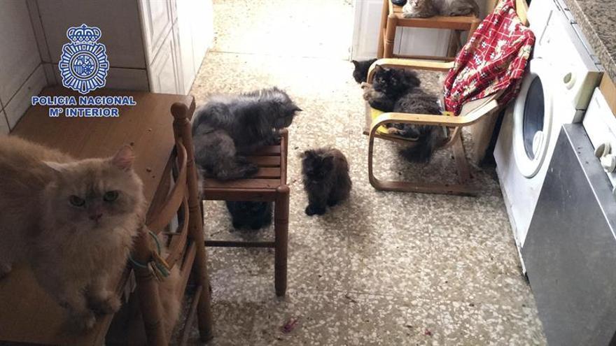 Detenido un matrimonio que tenía 39 gatos y 13 perros hacinados en su casa en Vélez-Málaga