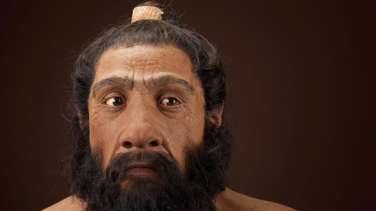 Neandertal adulto. / Artista: John Gurche ; fotógrafo: Chip Clark