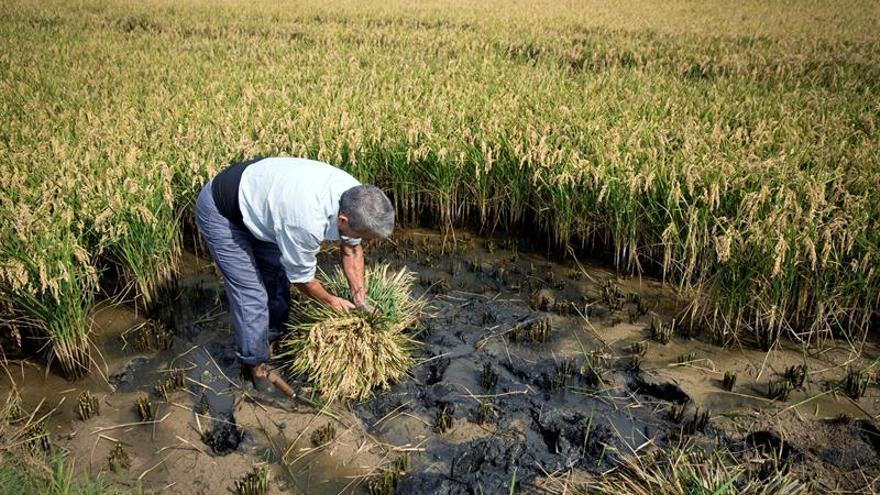 El aumento de temperaturas reducirá producción de trigo, arroz, maíz y soja