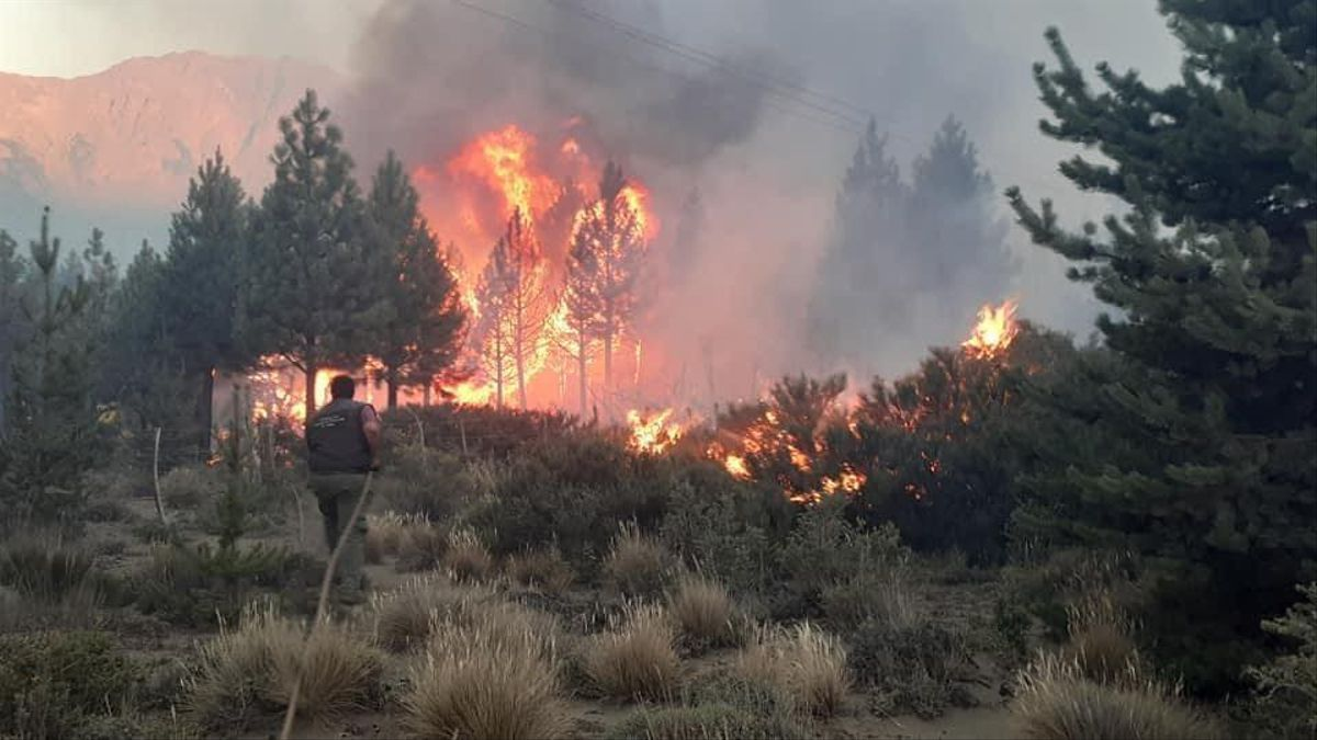 El fuego arrasó con más de 10.000 hectáreas de zona boscosa