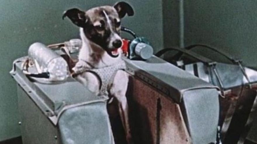 Laika, en su cápsula espacial