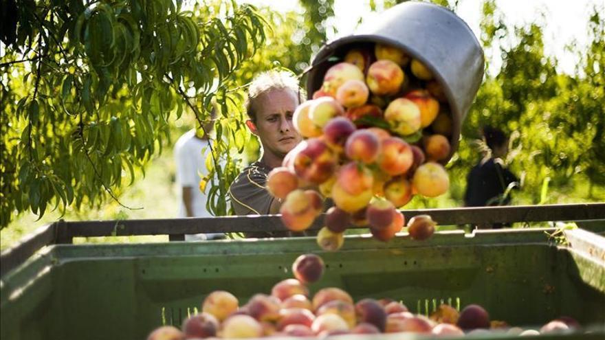 Productores piden a la Comisión Europea medidas urgentes frente a la crisis en el sector de la fruta