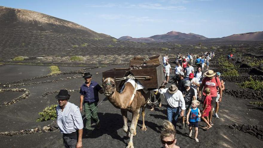 Turistas acompañan a uno de los campesinos que aún siguen explotando de manera tradicional los viñedos de La Geria.