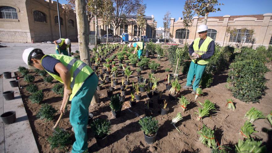 Els operaris inicien la plantada de 85.000 arbustos en el Parc Central