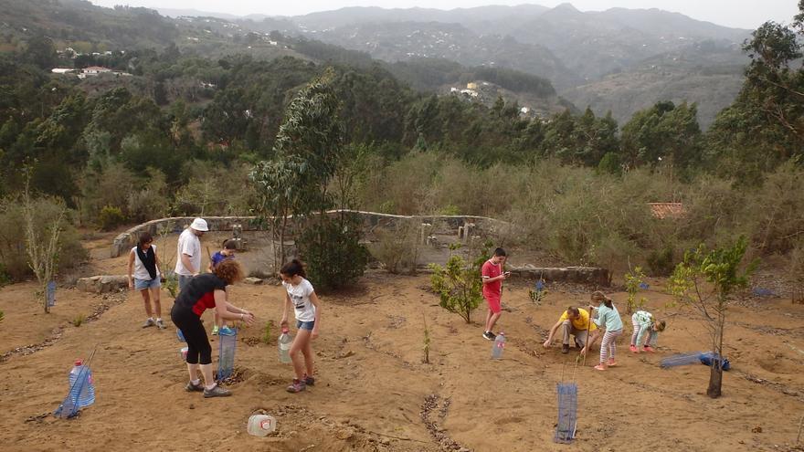 Más de sesenta personas plantan más de 100 nuevos árboles de laurisilva en la Montaña de Firgas.