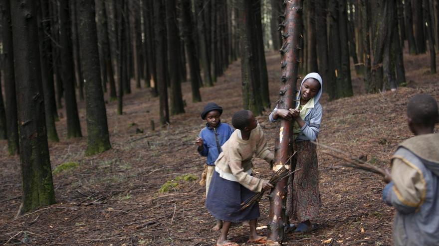 La presión sobre los bosques es mayor en los países pobres, especialmente en África