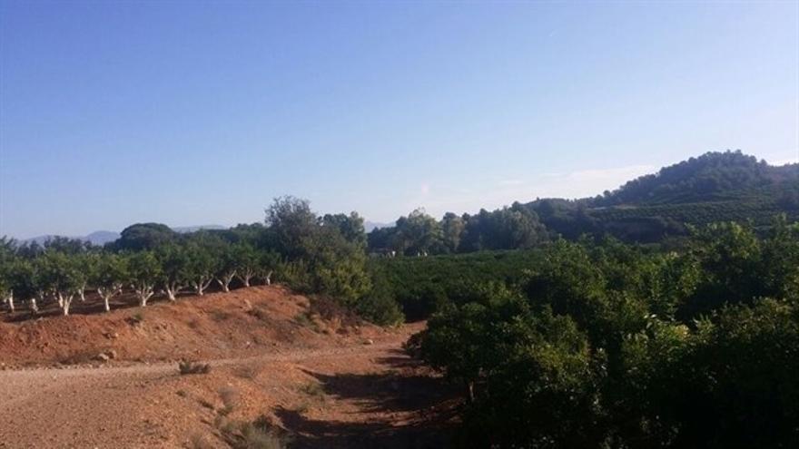 Paraje de Porxinos, en Riba-roja