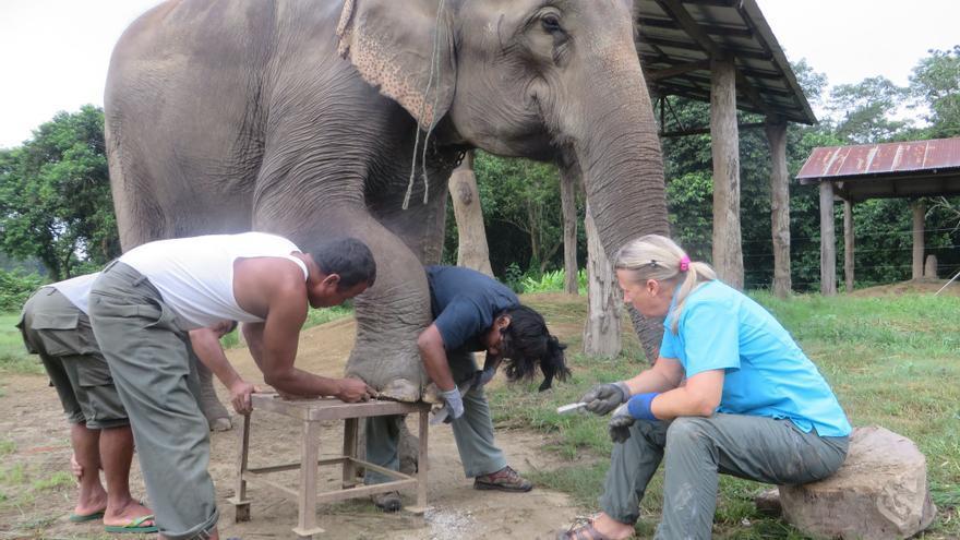 Recotando las uñas de un elefante en Nepal