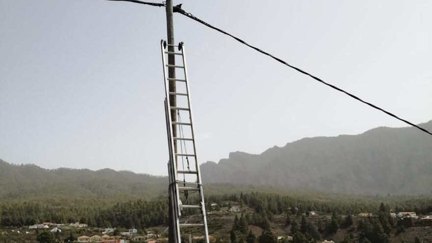 Los bomberos de La Palma rescatan a una graja atrapada en unos cables