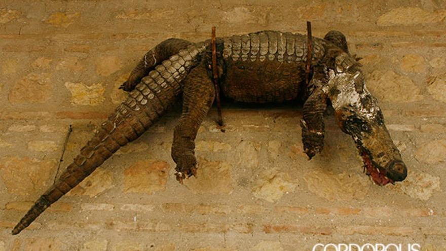 El caimán de la Fuensanta