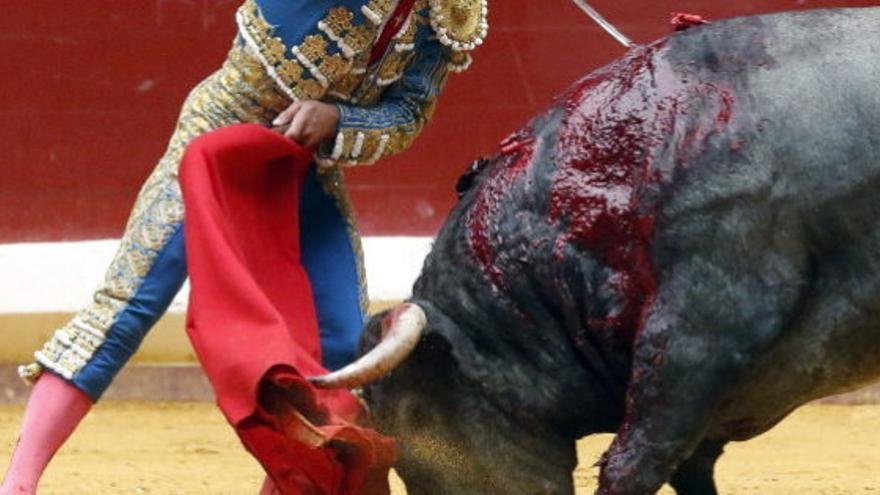 Tortura taurina